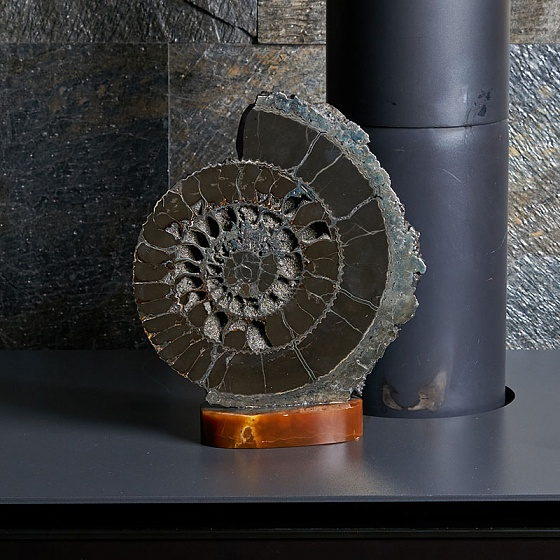 Amornious - Ammonite on the stand